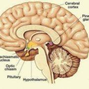 settimo chakra pituitaria